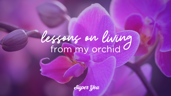 Lessons from my Orchid